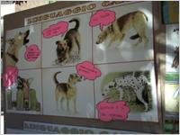 progetto scuole canile 1