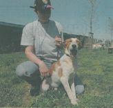 Articolo sui cani 2011