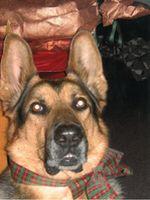 Cani del concorso fotografico del 16 ottobre 2011