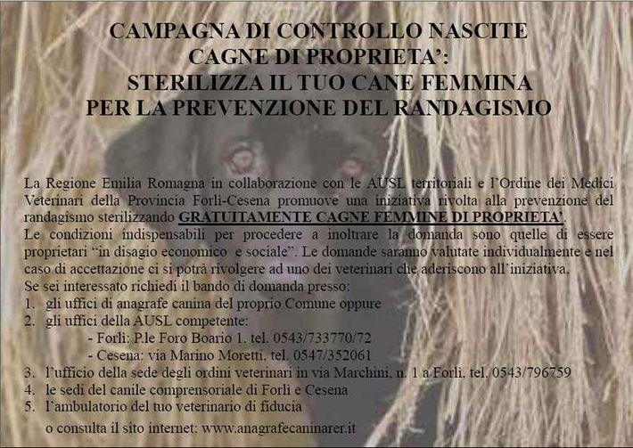 campagna sterilizzazioni canile 2012
